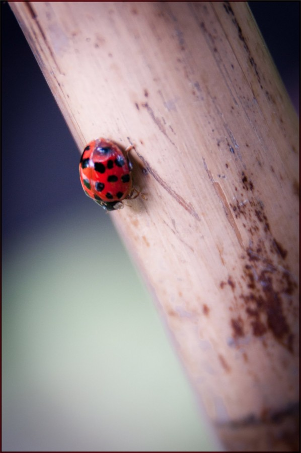 coccinelle Photographe grenoble Isere Marie-Cat Photographies
